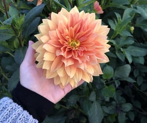 aesthetic, colour, and flower image