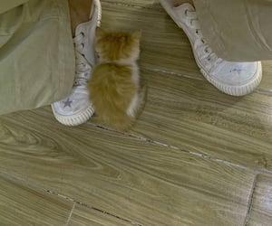alternative, boy, and kitty image