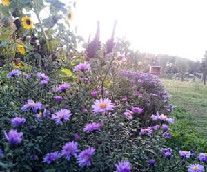 autumn, flower, and flowers image