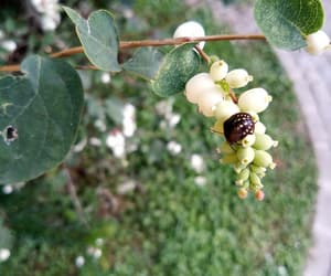 bug, fruit, and green image