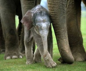 animal, baby, and Éléphant image