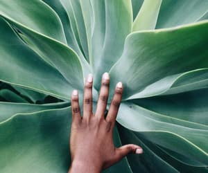 green, hand, and photography image