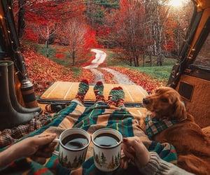 autumn, dog, and coffee image