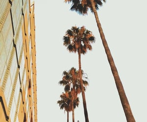 city, palm trees, and travel image