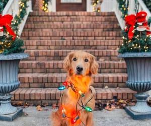 dog, puppy, and light image
