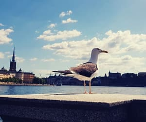 bird, sweden, and city image