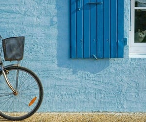 bicycle, blue, and cat image