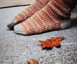 autumn, colorful, and cozy image