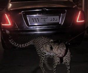 car, animal, and dark image