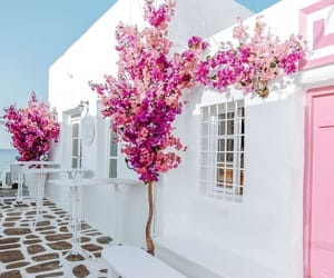 pink, flowers, and Greece image