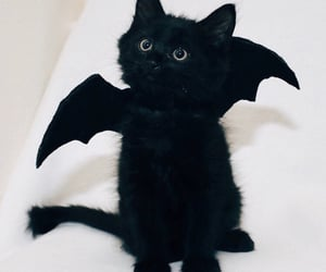 black cat, bat wings, and batcat image
