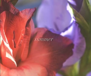 flower, summer, and theme image