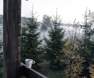 coffee, forest, and outside image