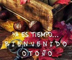 autumn, otoño, and hola image