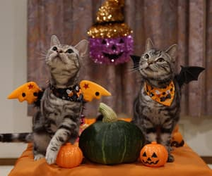 cat, Halloween, and pets image