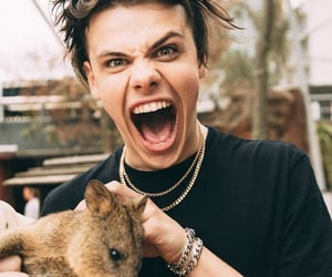 yungblud, crazy, and animal image