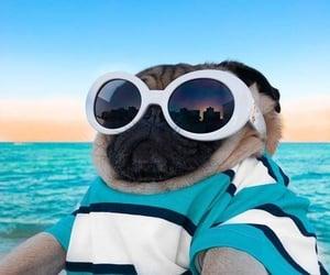 dog, icon, and pug image
