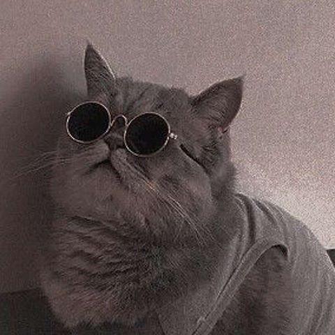 gato, icon, and Gatos image