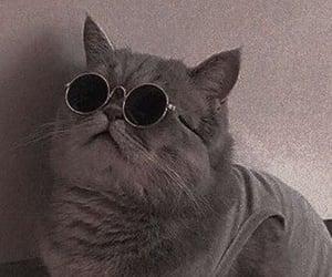 gato, Gatos, and lindo image
