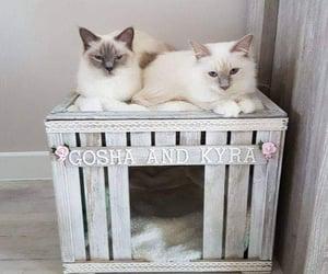 diy and gato image