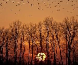 bird, autumn, and sun image