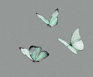 aesthetic, banner, and butterflies image