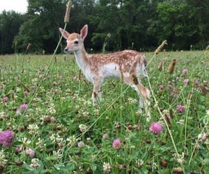 nature, animal, and flowers image
