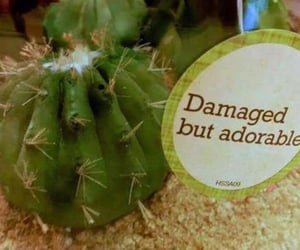 cactus, funny, and humour image