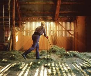 animals, farm, and light image