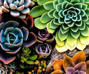beautiful, green, and wallpaper image