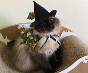 cat, kitten, and Halloween image