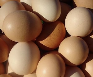 beige and eggs image