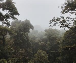 costa rica, green, and jungle image