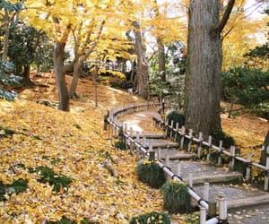 autumn, sun, and autumnal image