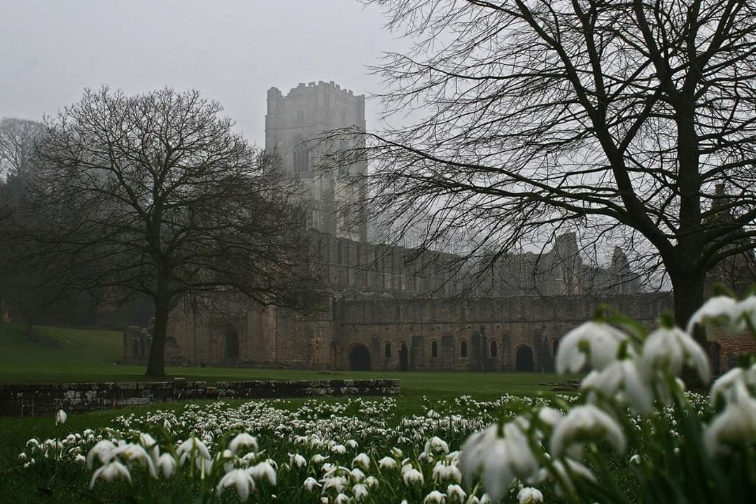 dark, flowers, and fountains abbey image