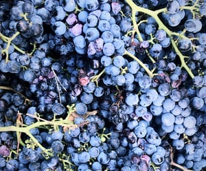 autumn, grapes, and pattern image