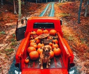autumn, pumpkin, and dog image
