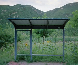 flowers and bus stop image