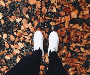 aesthetic, autumn, and cold image