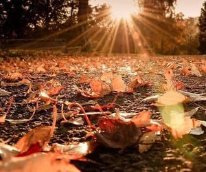 autumn, leaves, and sunshine image