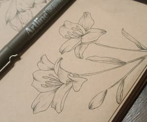 draw, drawing, and draws image