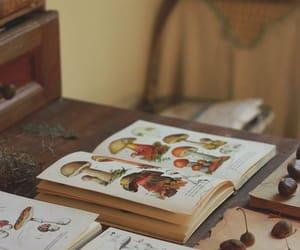 book and mushrooms image