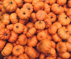 pumpkin, orange, and aesthetic image