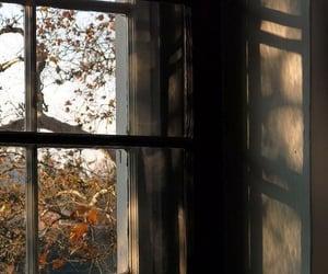autumn, window, and fall image