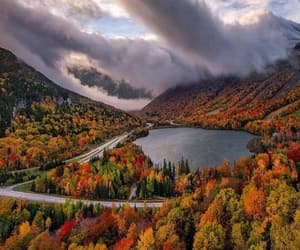 autumn, fall, and trees image