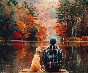 dog, autumn, and nature image