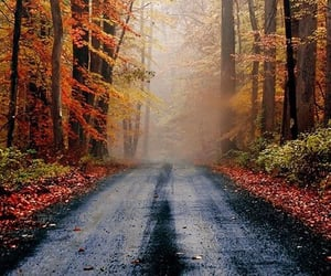 autumn, tree, and road image