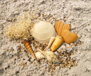 heart, sea, and seashell image
