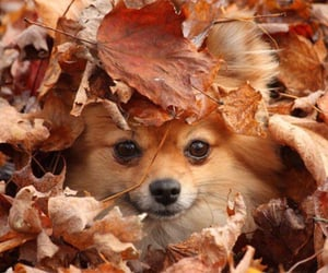 autumn, puppy, and cute image