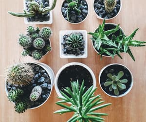 babies, cacti, and cactus image